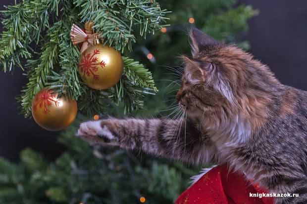 Новый год, кошка