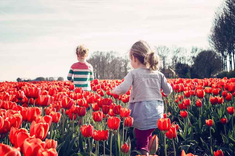 Цветы, тюльпаны, лето, девочка